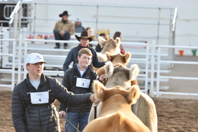 Arizona National Livestock Show Judging Clinic